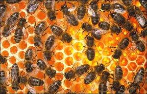 Healing from the Hive: Explore honey bees @ Driftless Folk School | Viroqua | Wisconsin | United States