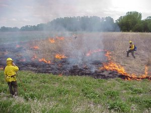 Igniting the Spark: How Prescribed Burns Restore Prairie Ecosystems @ Upper Mississippi River National Wildlife & Fish Refuge | Onalaska | Wisconsin | United States
