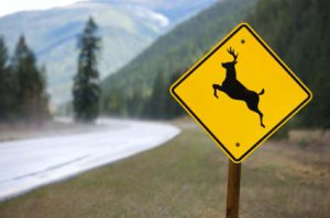 Roadkill 101 @ Driftless Folk School | La Farge | Wisconsin | United States