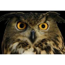 International Owl Center Festival Of Owls Explorelacrosse