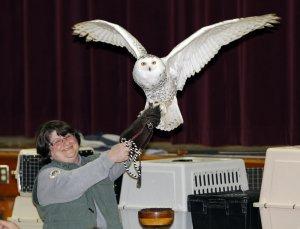 International Festival of Owls @ Houston High School | Houston | Minnesota | United States