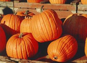 Rainbow Ridge Pumpkin Patch @ Rainbow Ridge Farms | Onalaska | Wisconsin | United States