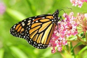 Restoring Pollinator and Wildlife Habitat in Your Backyard @ La Crosse County Administrative Center   La Crosse   Wisconsin   United States