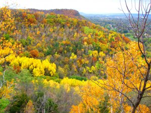 Fall Color & Yoga Hike @  La Crosse Bluffland - Beck Tract, Miller Bluff | Champaign | Illinois | United States