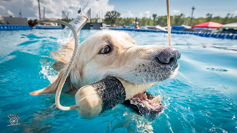 Driftless Outdoors Show to feature a DockDogs® Competition